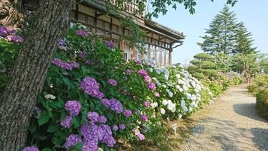 山ノ神社の紫陽花見学へ行って来ました!《デイ&小規模みさと》