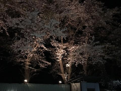 りつわフローラルⅡで夜桜を見てきました♥