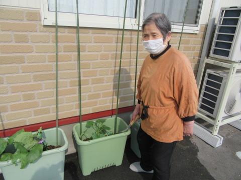 七ツの森! 遅れましたが!!夏野菜を植えました!!