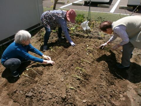 リツワいずみ 畑に種をまきました!